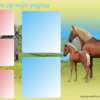 Layout,lusitano - layouts