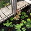 Tuin - Vijver 28-08-13 11 - In de tuin 2013