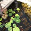 Tuin - Vijver 28-08-13 10 - In de tuin 2013