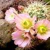 P1060798 - Cactus