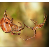 Spiders - Close-Up Photography