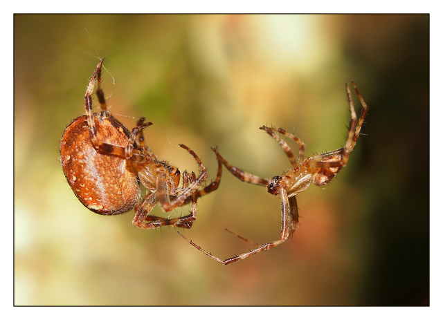 Spiders Close-Up Photography