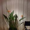 P1030928 - orchideëen