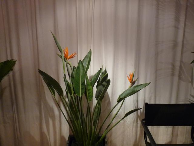 P1030928 orchideëen