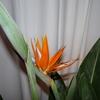 P1030933 - orchideëen