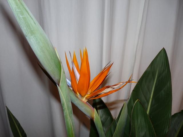 P1030933 orchideëen