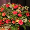 R.Th.B.Vriezen 2013 11 09 8539 - Muziekvereniging HEIJENOORD...