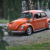DSC-0761 - Beetle