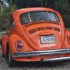 DSC-0786 - Beetle