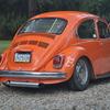 DSC-0791 - Beetle