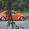 DSC-0801 - Beetle