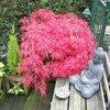 Tuin - 14-10-13 Japanse Esd... - In de tuin 2013