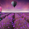 purple-flower-field-air-bal... - prabhas