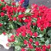 R.Th.B.Vriezen 2014 02 08 9733 - PvdA Arnhem Canvassen Het A...