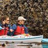 Image - Island Sea Kayaking Tours