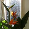 P1040287 - orchideëen