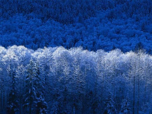 Winter Picture Box