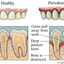 dentist - Oral Health