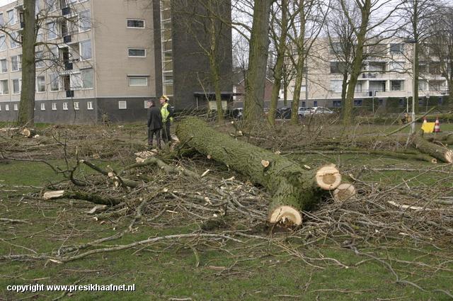 Bomenkap park Kinderkamp Nieuwsfoto's Presikhaafnet
