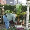Tuin - Palmboom 17-03-14 4 - In de tuin 2014
