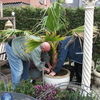 Tuin - Palmboom 17-03-14 2 - In de tuin 2014
