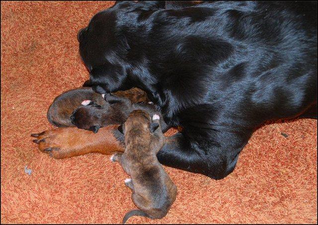 17 puppies dag 4