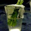 Epiphylum stekken 015a - cactus