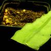 Epiphylum stekken 018a - cactus