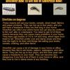 getridofsilverfish - Picture Box