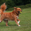 Dog boarding Leeds - marchofthek9s