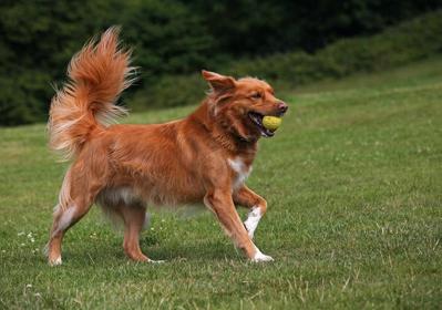 Dog boarding Leeds marchofthek9s