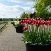 DSC9750 - Stoomtram Hoorn Medemblik