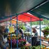 plantjesmarkt 2014 (2) - plantjesmarkt 2014