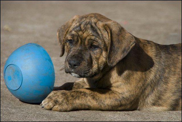 57 puppies 17 mei