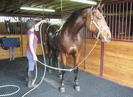 horse rubber mats horse rubber mats