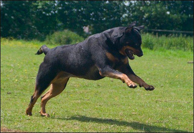 39 honden en puppen 9 juni