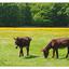 Chenonceau Ponies - France