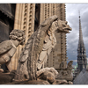 Notre Dame Chimeras - France