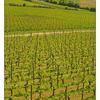 Saint Emilion Vineyard - France
