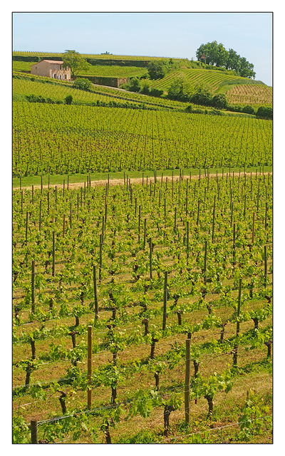 Saint Emilion Vineyard France