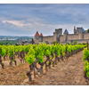 - Carcassonne Vineyard - France