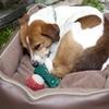 Dog Beds Online - Dog Beds Mega Store