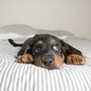 Dog Bed - Dog Beds Mega Store