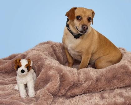Dog Beds Dog Beds Mega Store