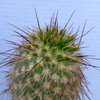 P1070790 - Cactus