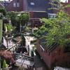 Tuin 24-08-14 (1) - In de tuin 2014