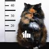 bad-cat-fuck - Picture Box