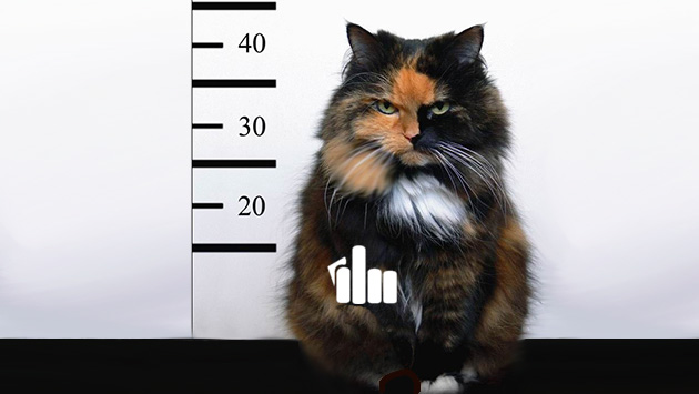 bad-cat-fuck Picture Box