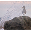 Seagull Splash - Wildlife
