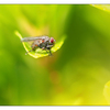 Fly in Greens - Close-Up Photography